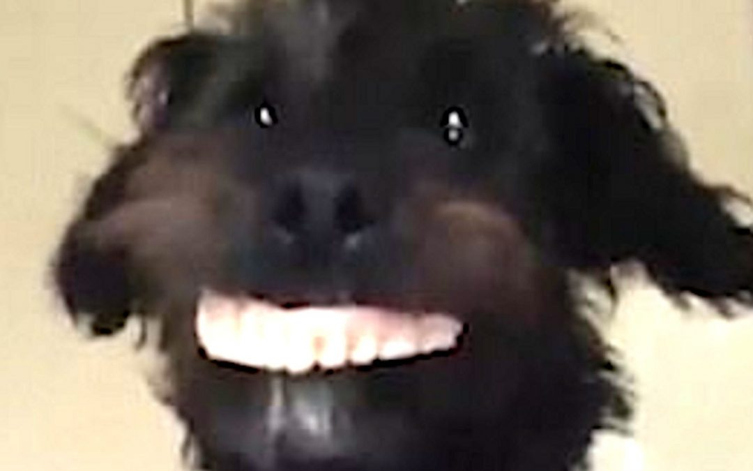 Dog Steals Family's Dentures And Makes The World Smile