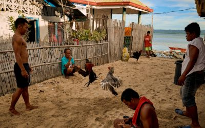 Rooster Kills Officer Christian Bolok in Police Raid in Philippines