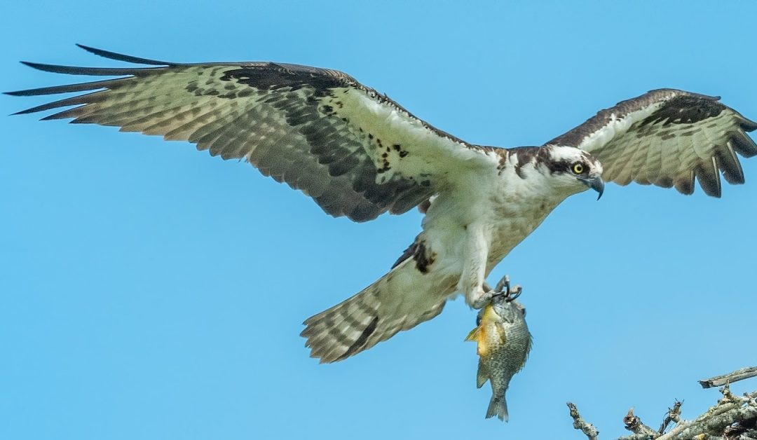 Osprey Fund's Bitcoin Trust Is Now Available to Retail Investors via OTC