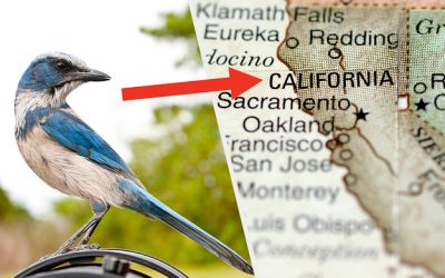 What Type Of Native California Bird Are You?